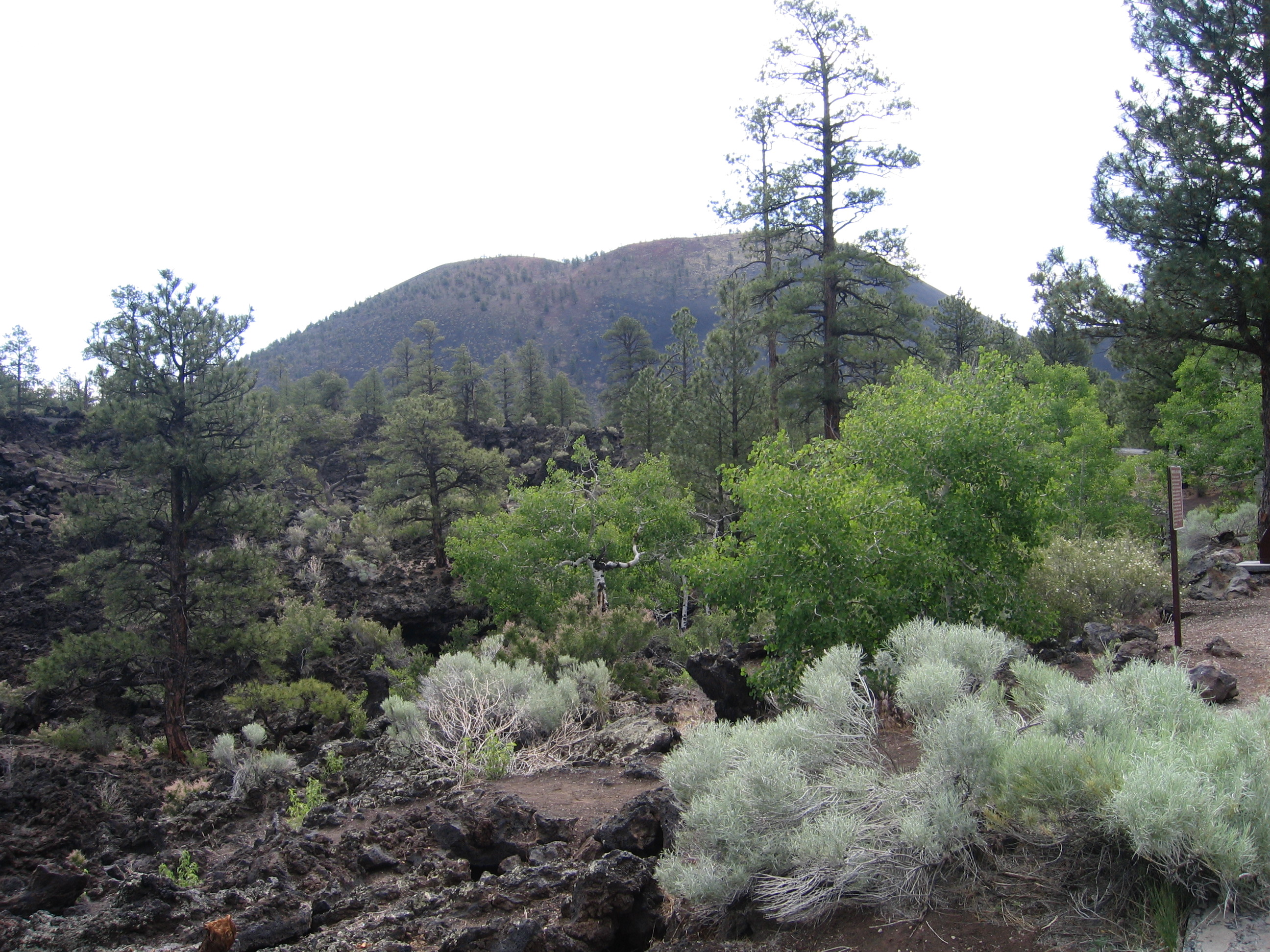 Sunset Crater, Arizona, USA, Juni 2005